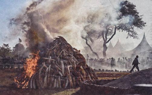 Kenya Ivory Burning